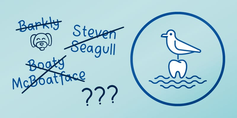 BSDG-Name-the-Seagull-Competition-800×400
